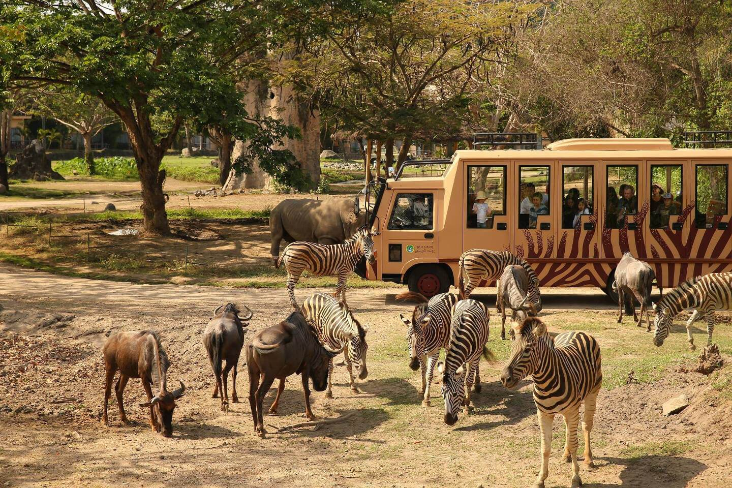 Bali Safari Park Book Direct And Save 10