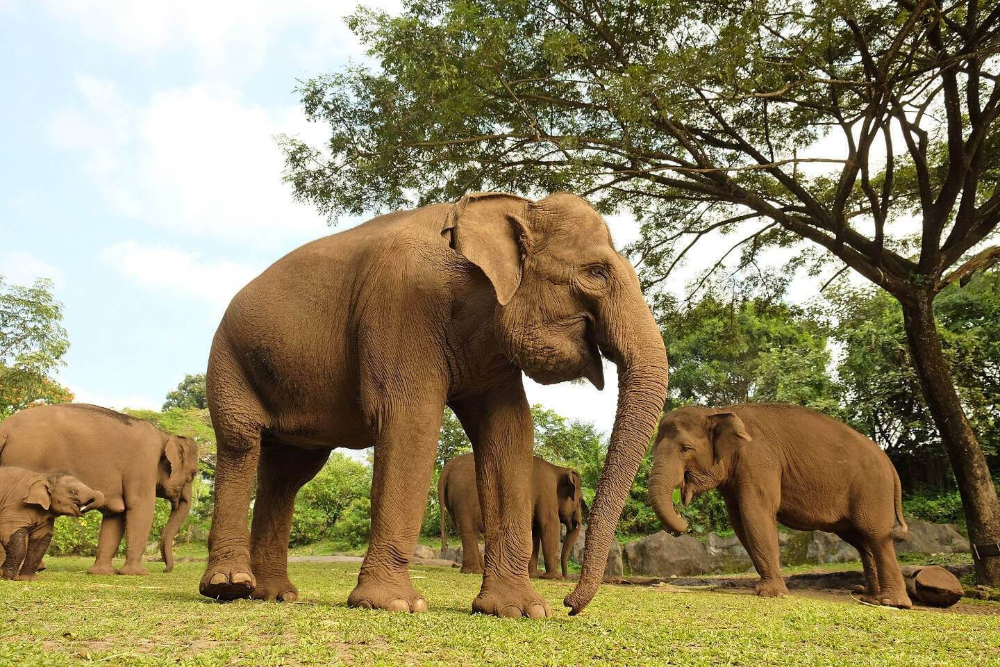 Bali Safari Park Book Direct And Save 10 Paket Liburan Trip Taman Elephants