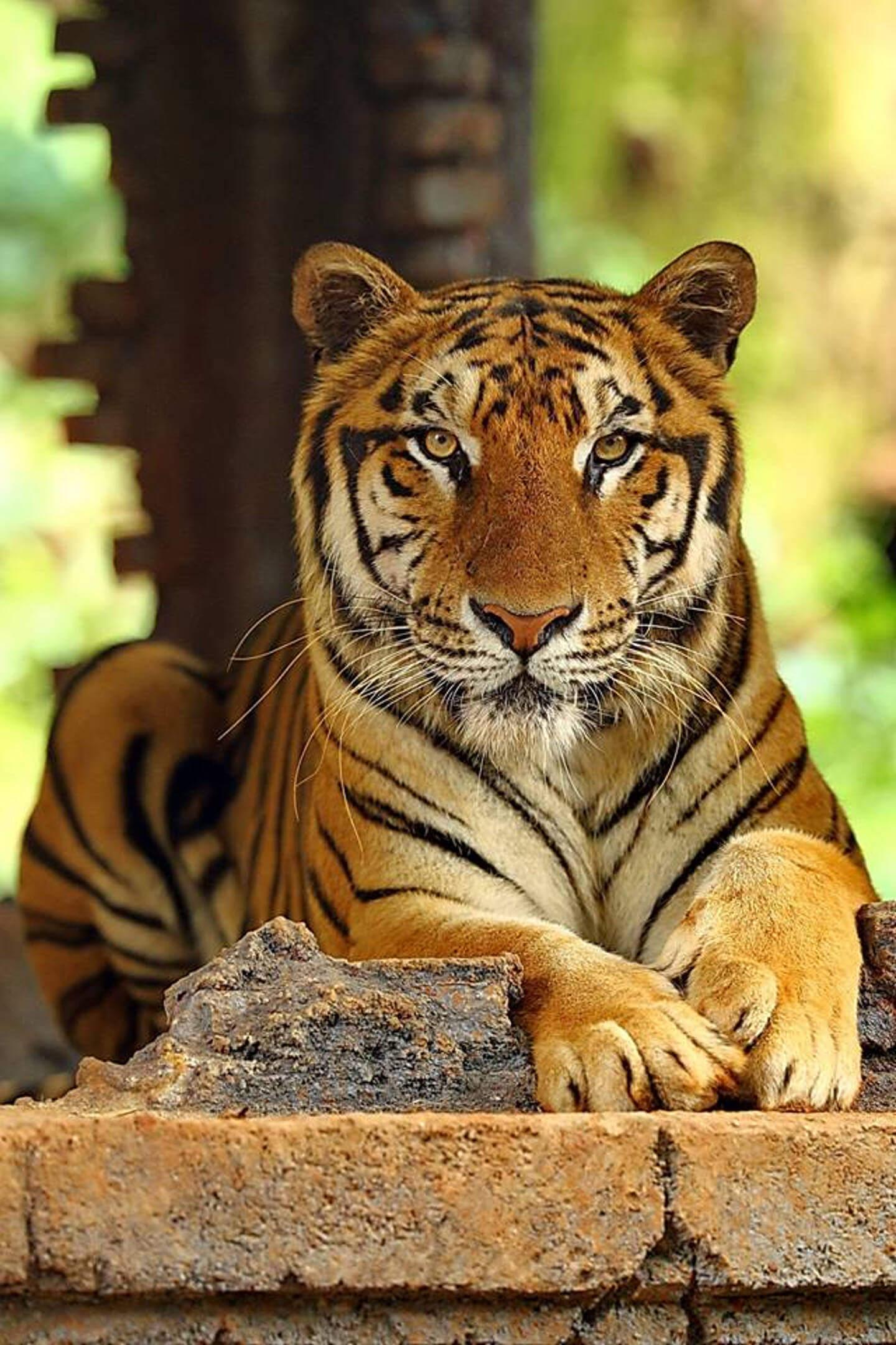 Bali Safari Park | Book direct and save 10%