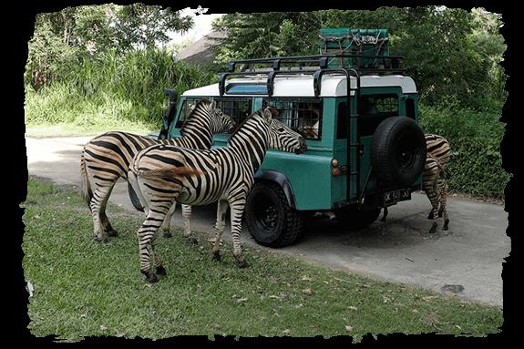 bali safari park book direct and save 10%Op Safari.htm #3