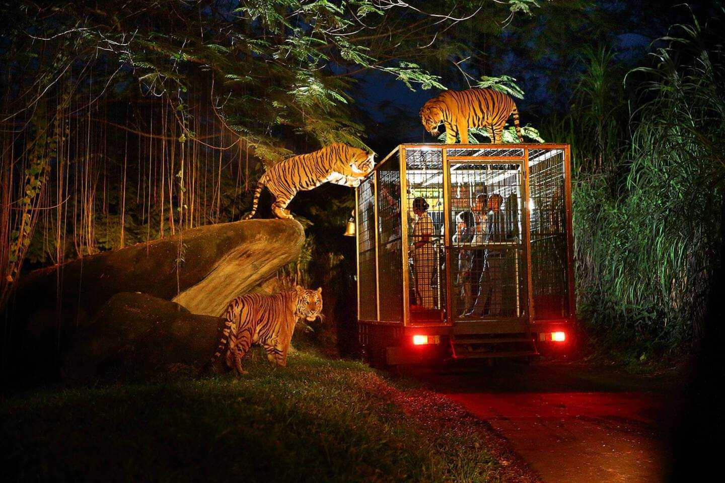 Night Safari Package | Bali Safari Park