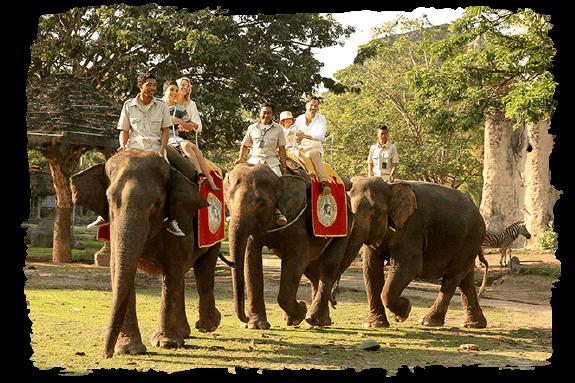 bali safari park book direct and save 10%Op Safari.htm #13