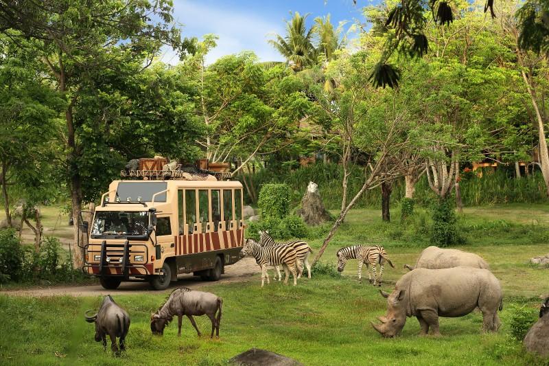 Jungle Hopper Package | Bali Safari Park