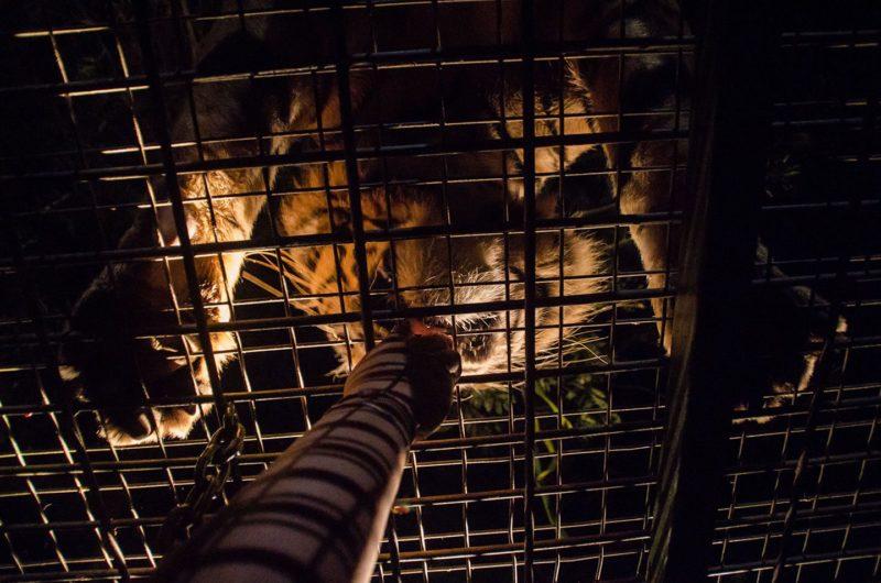 Night Safari Package Bali Safari Park