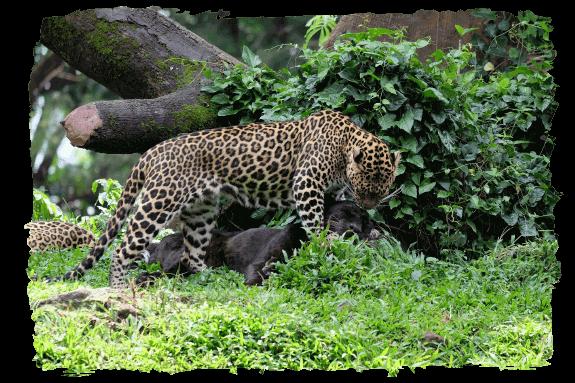 bali safari park book direct and save 10%Op Safari.htm #4