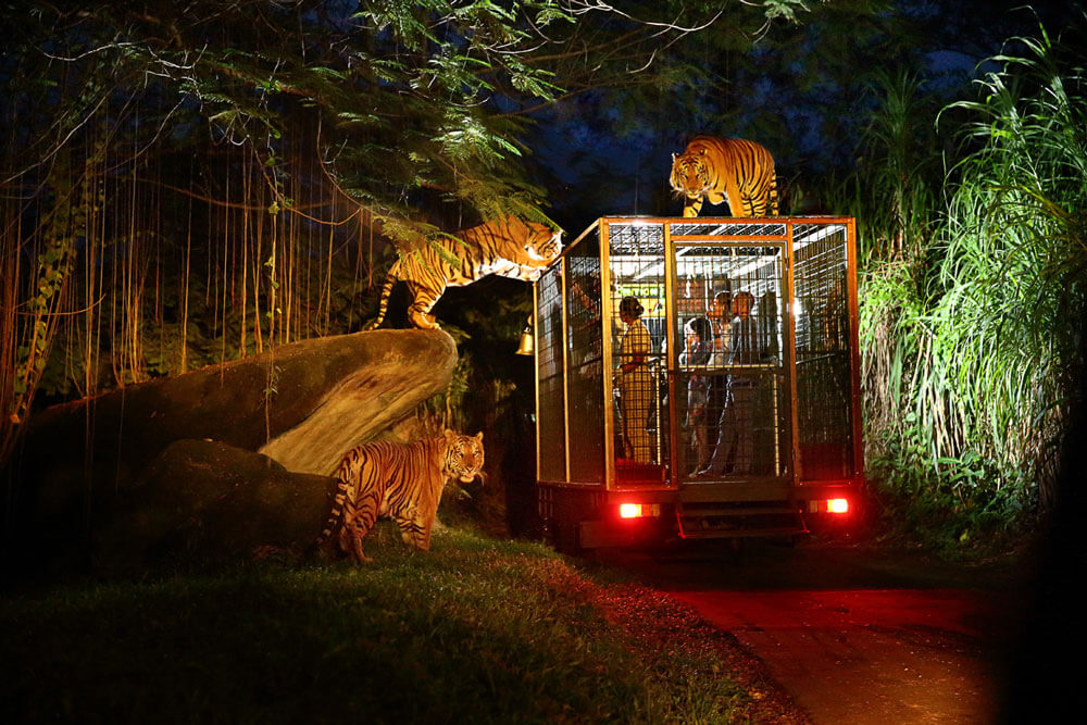 nigh safari - adventure in bali with bali safari park