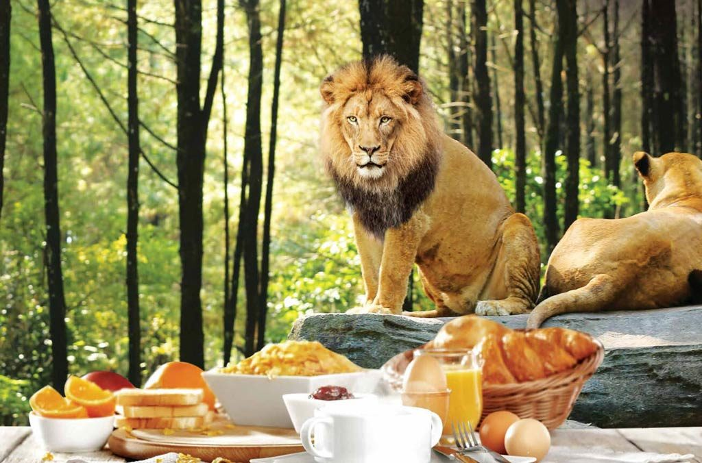 breakfast with lion - safaris better than zoos