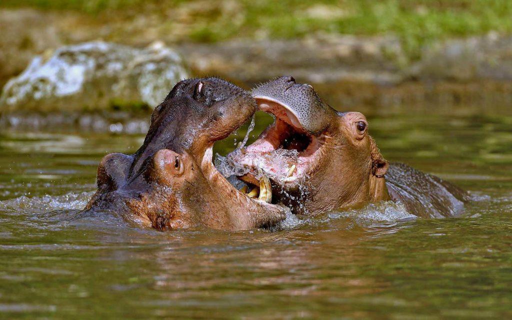 conservation program bali safari park