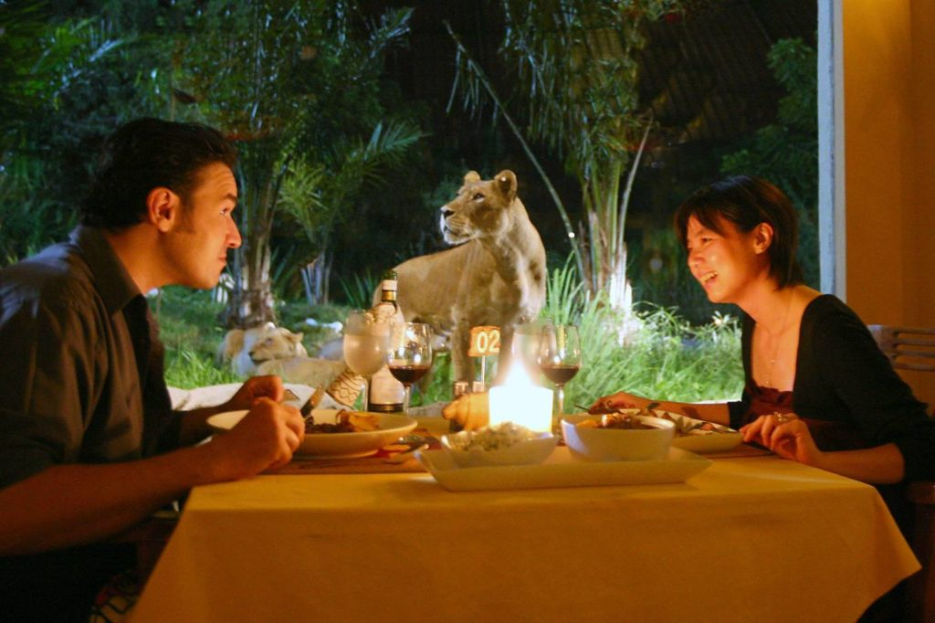 Dine with the King of the Jungle - Bali safari park
