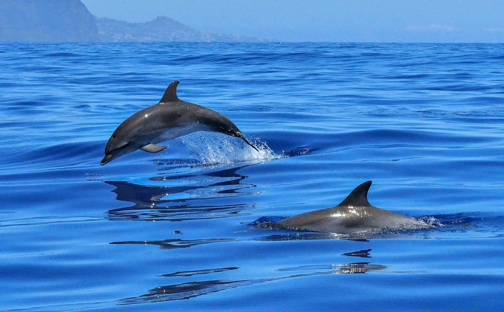 watching dolphin in bali - animal lovers