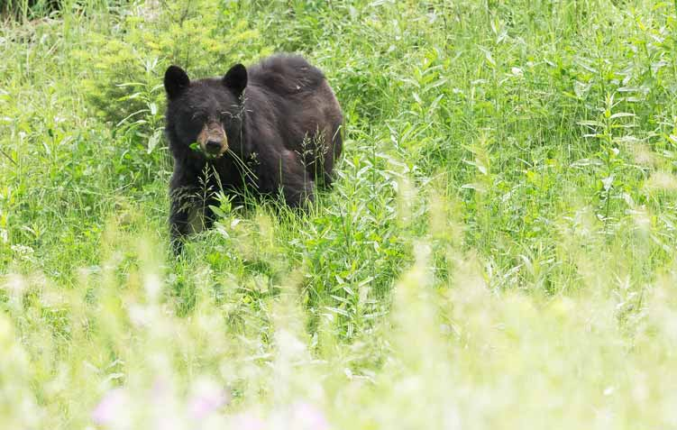 Bears-Different-types-of-Bear-3