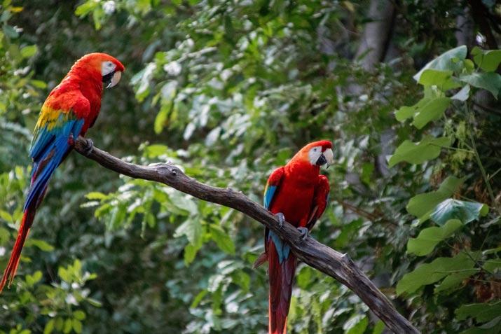 Bali Safari Birds – Meet the Beautiful Macaw