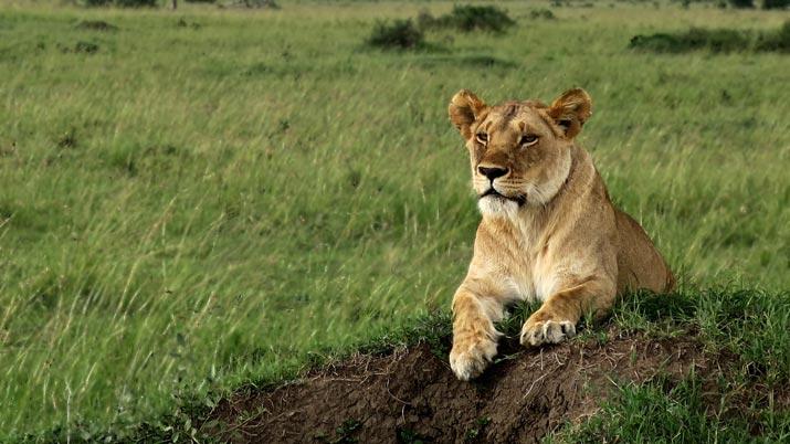 Mammal : What makes an animal a Mammal?