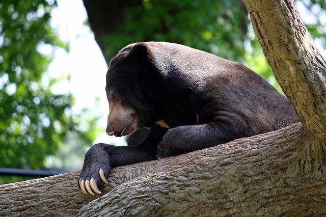 Bear Natural Environment
