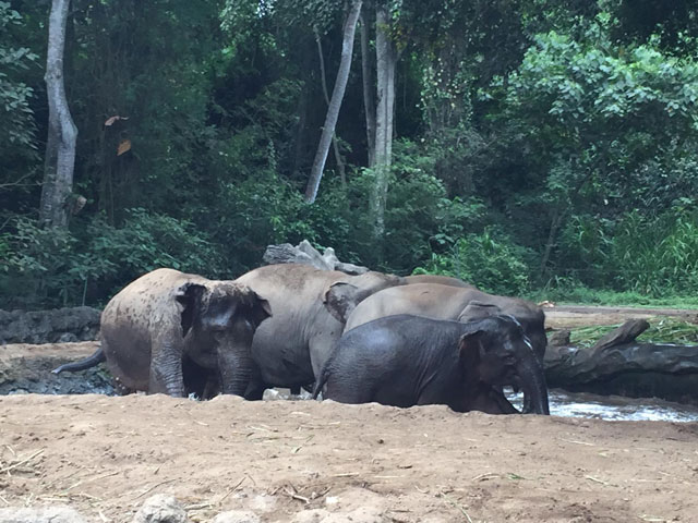 elephant-bali-safari-park
