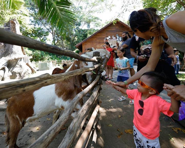 activities for kids - petting zoo
