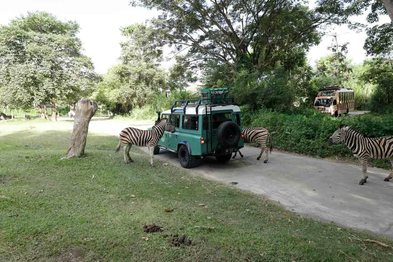 bali-safari-4x4-couple