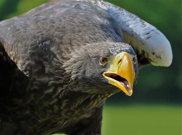 sea-eagle-animal-safari-night