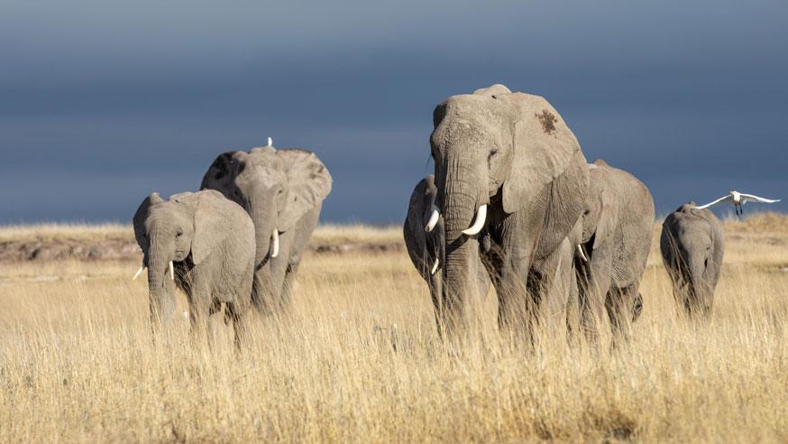 Elephants Relationships