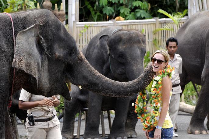 Elephants Show in Bali Safari & Marine Park