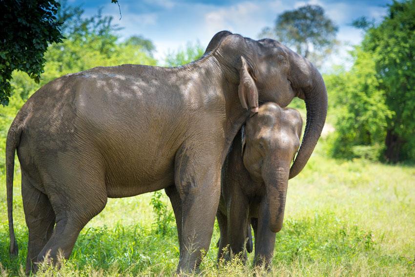 elephants empathy