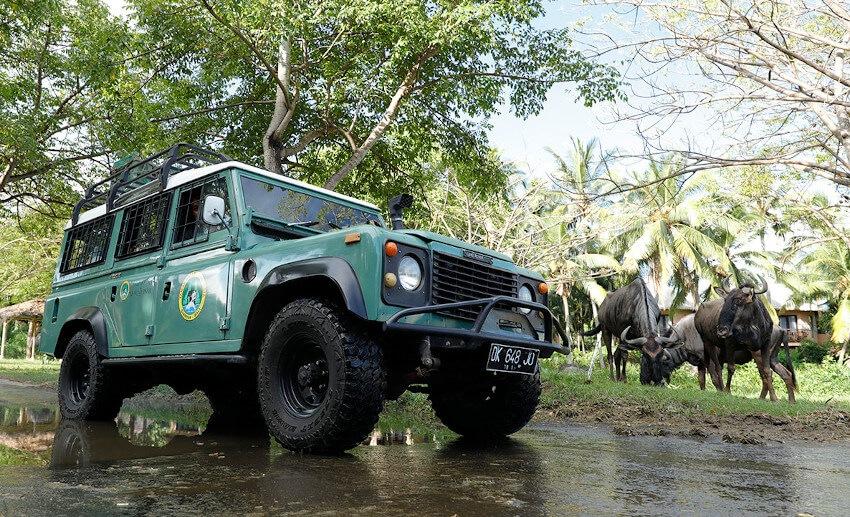 Jeep 4X4 in Bali Safari Park