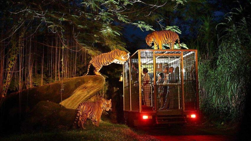 Night Safari in Bali Safari Park