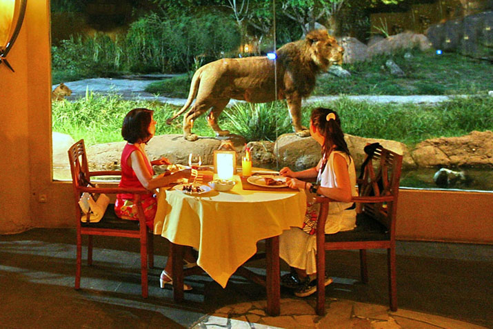 Tsavo Lion - having lunch at Bali Safari Park