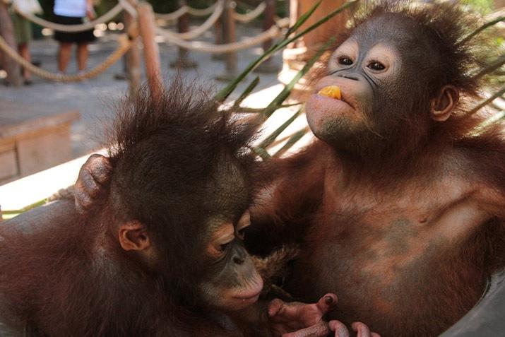World Monkey Day | Bali Safari Park
